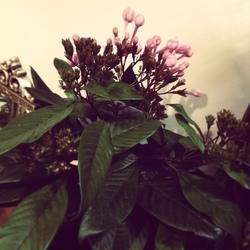 花.jpeg